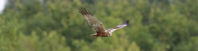 Meer reisverhalen, vogel- en natuurfoto's van Gerda